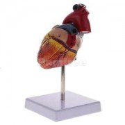 Alcoa Prime 1: 1 Life Size Human Heart Model for Medical School Learning Anatomy Toy