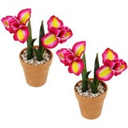 Wonderland Pink yellow flower with plastic pot (Set of 2)