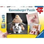 Puzzle Ravensburger - Funny Animal Portraits, 3x49 piese (08028)