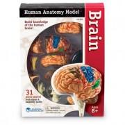 Corpul uman - Creierul - 31 piese - Set educativ