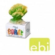 EBI AQUA DELLA CORAL MODULE S cabbage cora 8,9x6,4x5cm