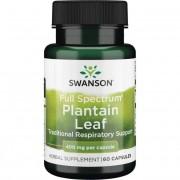 Swanson Jitrocel Větší (Plantain) 400 mg 60 kapslí