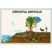 Circuitul azotului