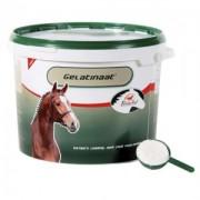 Primeval Gelatinaat paard - 5 kg