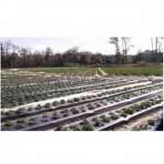 Folie mulcire neagra Politiv, Perforata, 0.030 mm, H1131