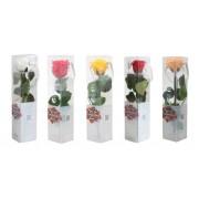 Trandafir Criogenat Natural, cu tulpina si cutie pentru cadou