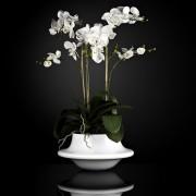 Aranjament floral ATOLLO 3 WITH PHALENOPSIS BIG