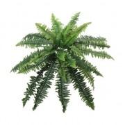 Bellatio flowers & plants Kantoorplant krulvaren 28 cm