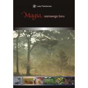 Magia sosnowego boru - DVD