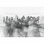 W + G Wizzard and Genius Fotobehang White horses - 4 delig