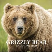 Grizzly Bear Calendar 2020: 16 Month Calendar, Paperback/Golden Print