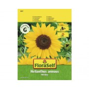 FloraSelf seminte de floarea soarelui Holiday
