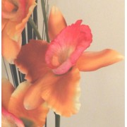 ORANGE PINK LARGE ORCHID FLOWER DISPLAY