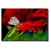 Tablou Canvas Papagal 2