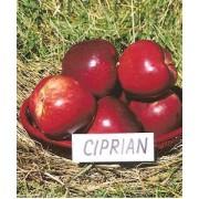 Măr Ciprian