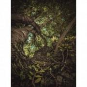 Tablou Canvas Copac urias 60 x 80 cm Rama lemn Multicolor