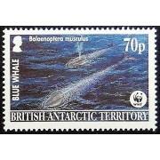 Blue whale Balaenoptera musculus -Handmade Framed Postage Stamp Art 0688