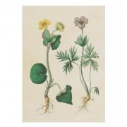 Dille&Kamille Carte, fleurs jaunes et violettes