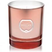 Maison Berger Paris Poesy Bouquet Liberty lumânare parfumată 240 g