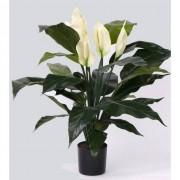 Bellatio flowers & plants Kamerplant Lepelplant 75 cm