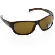 Polaroid Oval Sunglasses(Brown)