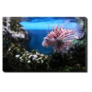 Tablou Canvas Devil Lionfish