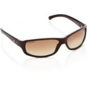 Fastrack Round Sunglasses(Brown)