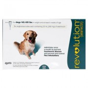 Revolution (Green) for Large Dogs 40.1-85lbs 6 Doses Pack