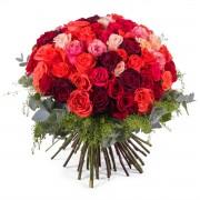 60 Rosas Multicolor de Tallo Corto - Flores a Domicilio