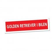 Golden Retriever i Bilen Klisterdekal