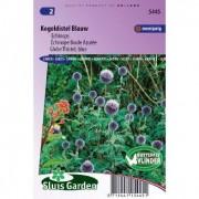 Echinops Ritro zaden Kogeldistel Blauw