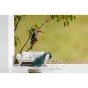 Fotobehang vinyl - Grijskopijsvogel is aan het zonnebaden in een boompje breedte 420 cm x hoogte 280 cm - Foto print op behang (in 7 formaten beschikbaar)