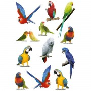 Geen 12x Papegaaien vogels/dieren stickers 3D effect