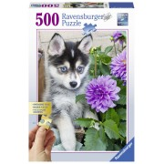 Ravensburger Puzzle Catel Husky, 500 Piese