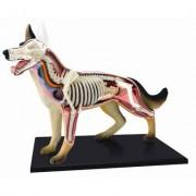 4D-Vision Dog Anatomy Model