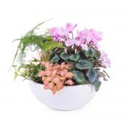 Interflora Centro de plantas variado - Flores a Domicilio