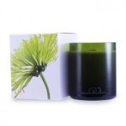 DayNa Decker Botanika Multisensory Candle with Ecowood Wick - Maja 170g - Home Scent