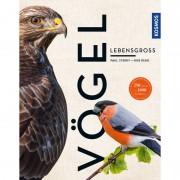 Kosmos Verlag Buch Vögel lebensgroß