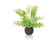 biOrb vodní rostlina Caulerpa