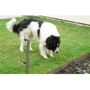 Villanypásztor készlet, nagy testű, hosszú szőrű kutyákra