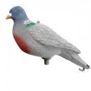 Lockvogel Taube sitzend