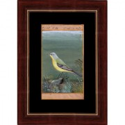 Mughal Period Bird of Grey-headed canary-flycatcher Indian Miniature Painting on Old Court Stamp Paper with Frame