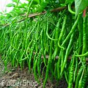 Chilli Vegetables Seeds