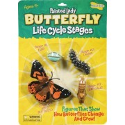 Butterfly Life Cycle Stages -- Case of 7