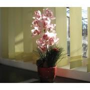 Orhidee de Craciun