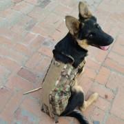 EH Canino Chaleco Táctico (color Del Ejército) L