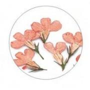 Flores Secas Color-003
