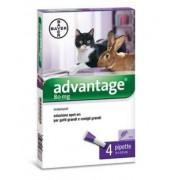Bayer Advantage 80 Spot Per Gatti Oltre 4 Kg