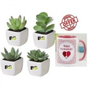 MIX PLANT COMBO OF SECCULENT LIVE ROLLING PLANT With Gift Anniversary Gift Mug