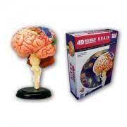 No.12 Brain Anatomy Anatomical Model Three-dimensional Puzzle Skynet 4d Vision